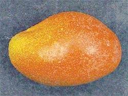 Προϊόντα: μάνγκο